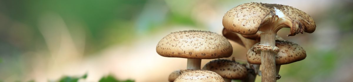 North West Fungus Group